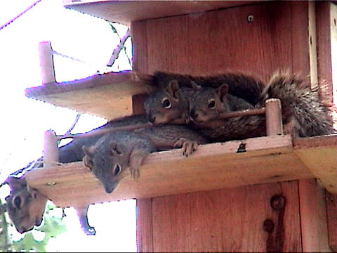 Bob 39 S Backyard Squirrel Condo Plans